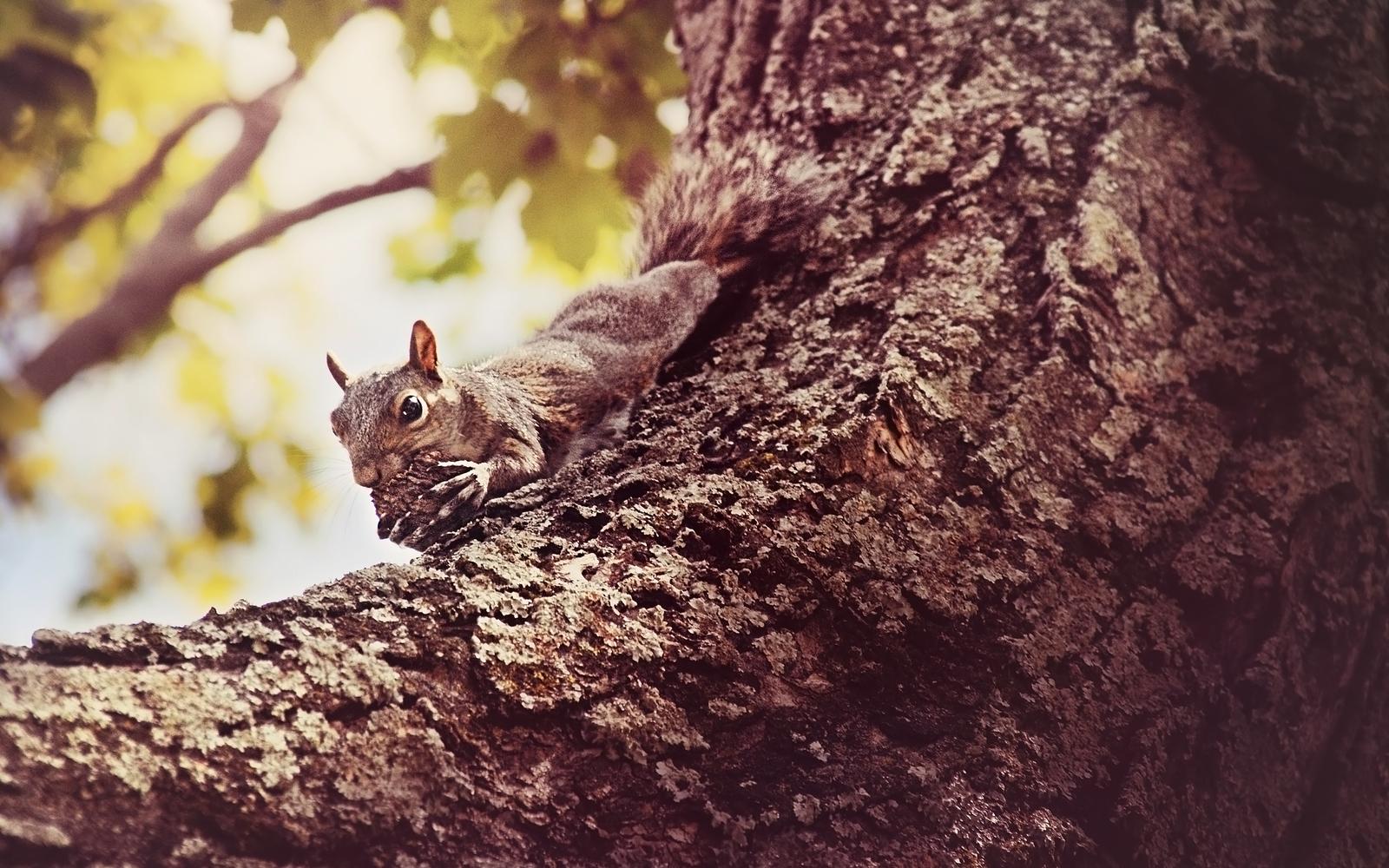 My Nut by bluesabreWife